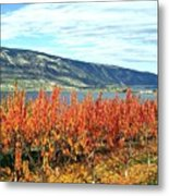 Autumn Cherry Orchard Metal Print