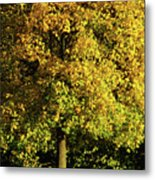 Autumn Colors 8 Metal Print