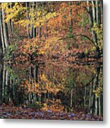 Autumn Colors Reflect Metal Print