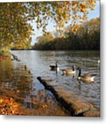 Autumn Colours At Sunbury On Thames Surrey Uk Metal Print