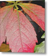 Autumn Colours Metal Print