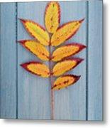 Autumn Colours On Blue Metal Print