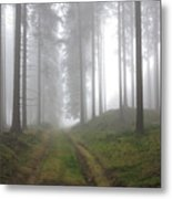 Autumn Coniferous Forest In The Morning Mist Metal Print