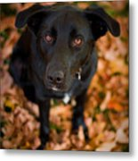 Autumn Dog Metal Print
