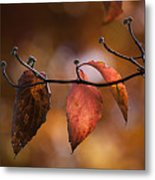 Autumn Dogwood 20121020_11 Metal Print