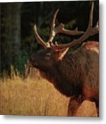 Autumn Elk In Cataloochee Valley Textured Metal Print
