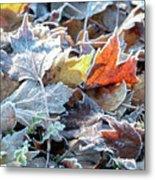 Autumn Ends, Winter Begins 3 Metal Print