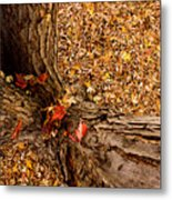 Autumn Fall Metal Print