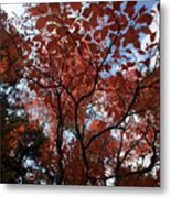 Autumn Fan Metal Print