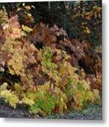 Autumn Ferns Metal Print