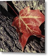 Autumn Find Metal Print