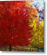 Autumn Fire  In  Red  And  Gold Metal Print