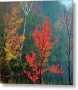 Autumn Fire Metal Print