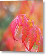 Autumn Fires Metal Print