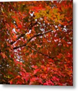 Autumn Foliage-1 Metal Print