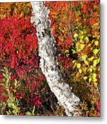 Autumn Foliage In Finland Metal Print