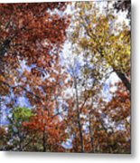 Autumn Forest Canopy Metal Print