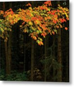 Autumn Forest Leaves Metal Print