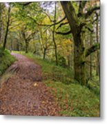 Autumn Forest Path - Metal Print