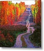 Autumn Forest Track Metal Print