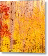 Autumn Forest Wbirch Trees Canada Metal Print