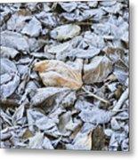 Autumn Frost Metal Print