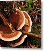 Autumn Fungi Metal Print