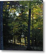 Autumn Glen Metal Print