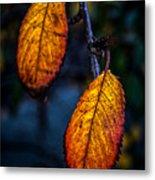 Autumn Gradation Metal Print