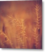 Autumn Grass Metal Print