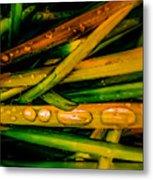 Autumn Grassy Rain Drops Metal Print