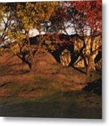 Autumn Grove Metal Print