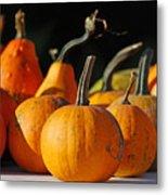 Autumn Harvest Gourds Metal Print