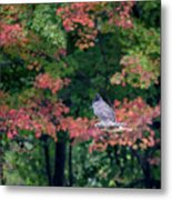 Autumn Hawk Square Metal Print