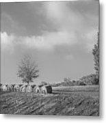 Autumn Hay Bw Metal Print