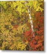 Autumn Impressions Metal Print