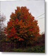 Autumn In Big Hill Metal Print