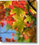 Autumn In Color Metal Print
