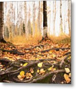 Autumn In Finland Metal Print