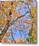 Autumn In Full Swing Metal Print
