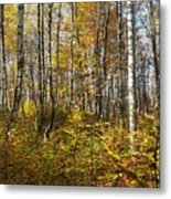Autumn In The Birches Forest Metal Print