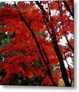 Autumn In New England Metal Print
