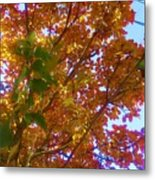 Autumn In The Canopy Metal Print