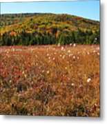 Autumn In The Glades Metal Print