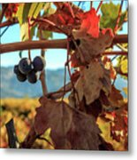 Autumn In The Wine Country Metal Print