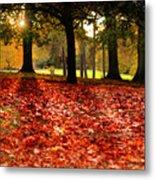 Autumn In Woodthorpe Metal Print