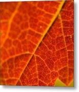 Autumn Intensity Metal Print