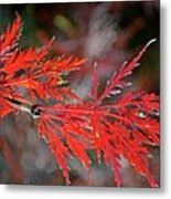 Autumn Japanese Maple Metal Print