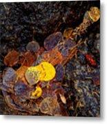 Autumn Jewels.. Metal Print