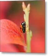 Autumn Ladybird Metal Print